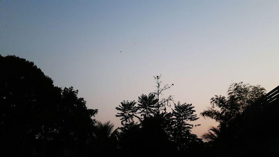 sky Tree Bird
