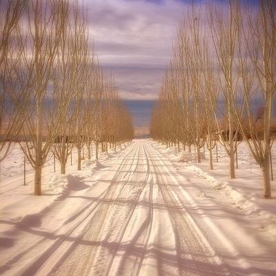 Snowy path.. Utah Utahgram Snow Winter westernlandscapes amazing landscape soft trees path instagood ig_utah igutah