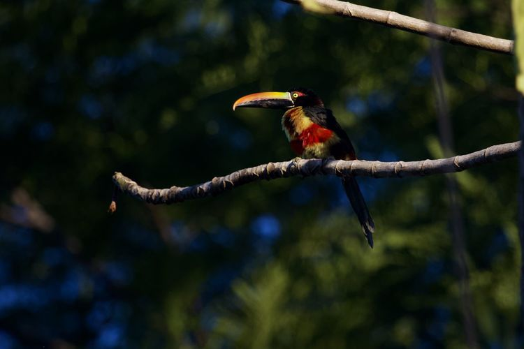 Animal Themes Animal Wildlife Vertebrate Animal Animals In The Wild Bird One Animal Tree Perching Branch Plant Focus On Foreground No People Nature Full Length Outdoors Day Kingfisher Beak Multi Colored