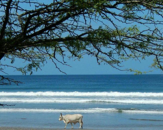 The Traveler - 2015 EyeEm Awards Costa Rica EyeEm Best Shots EyeEm Nature Lover Miles Away
