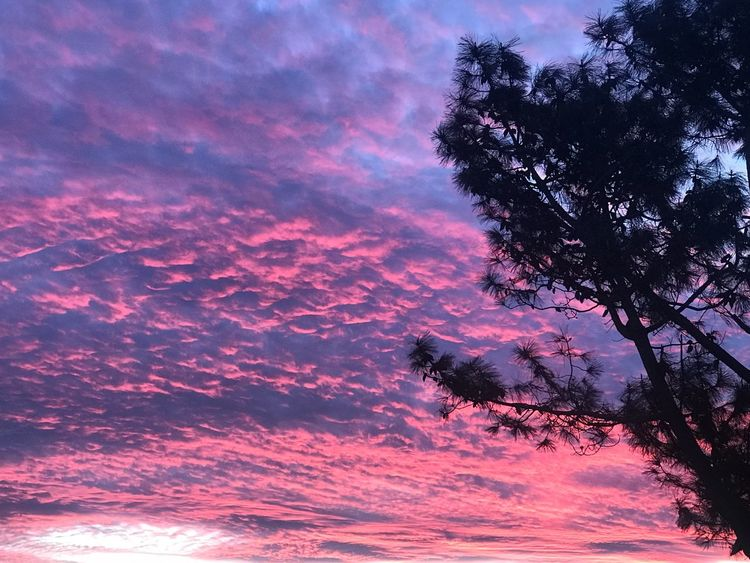 Under red sky Sunset Sky Tree Beauty In Nature Cloud - Sky Pink Color Plant Nature No People Scenics - Nature Growth Low Angle View Outdoors Dramatic Sky Tranquility Idyllic Orange Color Silhouette Tranquil Scene Purple Capture Tomorrow