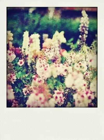 Flowers Nature Beutiful