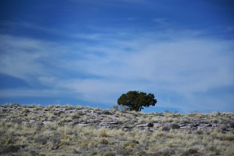 Somewhere along the I40 in New Mexico (Shot from a moving car) 🇺🇸 Nature Outdoors No People New Mexico, USA New Mexico Skies New Mexico Photography New Mexico Beauty Travel Photography Tree Blue Desert Sky Grass Close-up Landscape Cloud - Sky Single Tree Semi-arid Treetop Prairie Great Plains