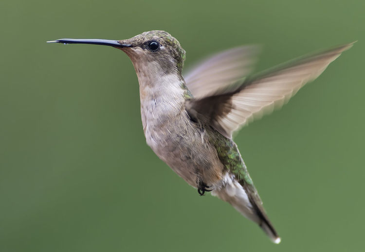 Hummingbird hovers over a feeder