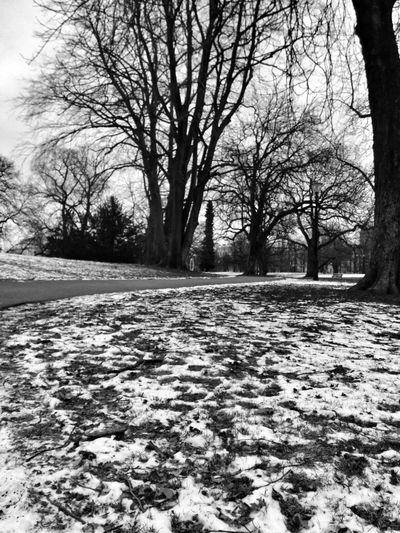 Landscape Park Winter Blackandwhite