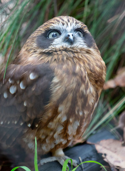 One Animal Animal Wildlife Animals In The Wild Vertebrate Bird Day Nature Plant Close-up Portrait No People Looking At Camera Outdoors Looking Bird Of Prey Focus On Foreground