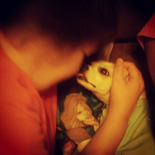 My mom doesn't like dogs, cant you tell???? ;) Bitztgram Dogkisses Dogstgram Petstagram chihuahua love dog sweet kisses