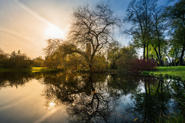 Reflection Water Tree Lake Sky Plant Tranquility Scenics - Nature Beauty In Nature Nature Tranquil Scene Sun Sunlight No People Non-urban Scene Idyllic Day Sunset Outdoors Reflection Lake