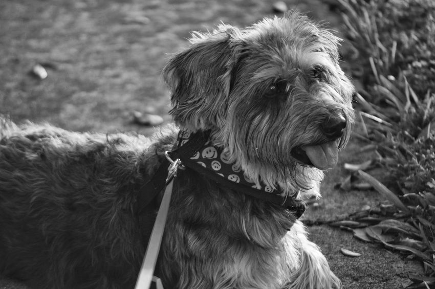 Dog Pets One Animal Domestic Animals Animal Themes Mammal Outdoors No People Day Close-up Nature Black And White Friday