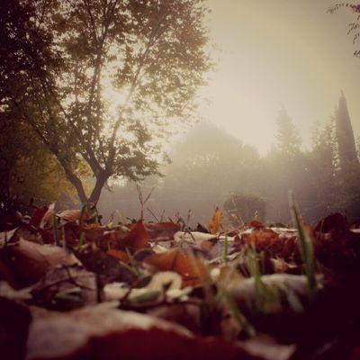 Autumn Sumaysiguenos Loyal_group1 Ig_alicante ig_europe madridgrafias movilgrafias en140instantes photographers_tr gf_spain gf_daily gf_family