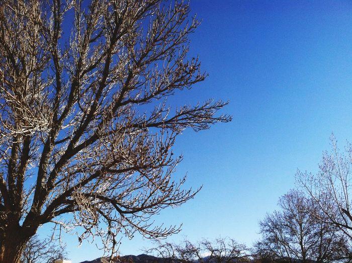 Mi Casa Sol' TreePorn For The Love Of Trees ~
