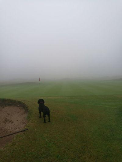 Dog No Golfers