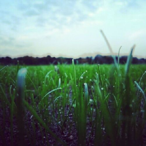 #green #grass after a #rainy #day. The #colour is not so #good #here in #instagram. #hope #you #like it #anyway. #gras #regen #nass #wet #rain #dunkel #water #nature #wasser #natur Colour Instagram Water Good Nature Gras  Rain Wasser Natur Dunkel Green Anyway Regen Nass Here Day You Rainy Like Grass Wet Hope