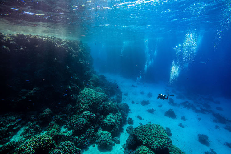 View Of Scuba Diver Swimming In Sea
