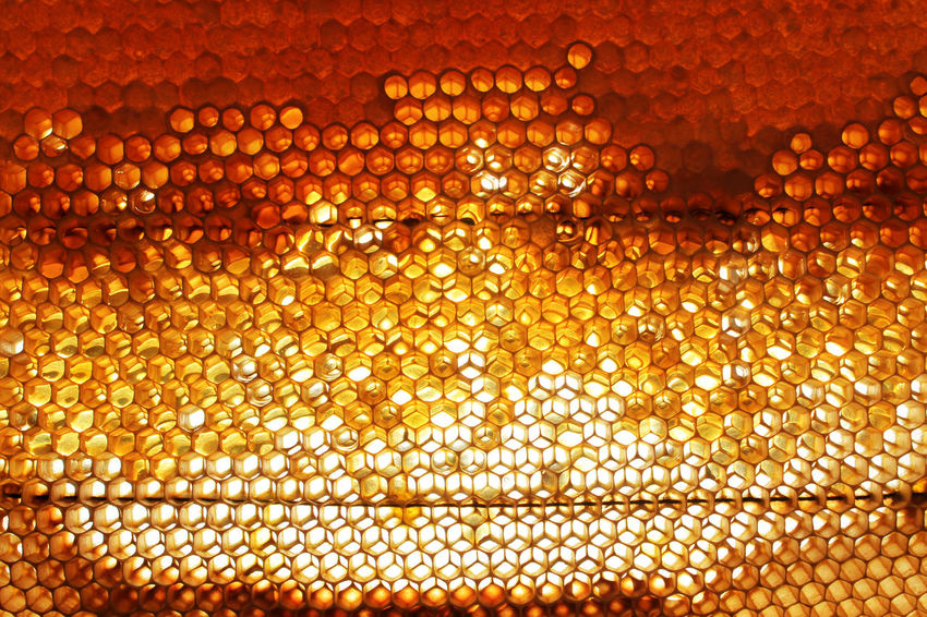 Abstract Backgrounds Bee Close-up Day Gold Colored Honey Honey Bee Honeycomb Nature No People Pattern Textured  Vibrant Color Yallow Yellow
