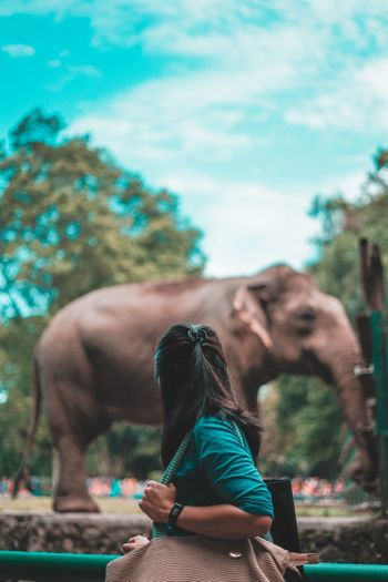 Woman looking at elephant in zoo