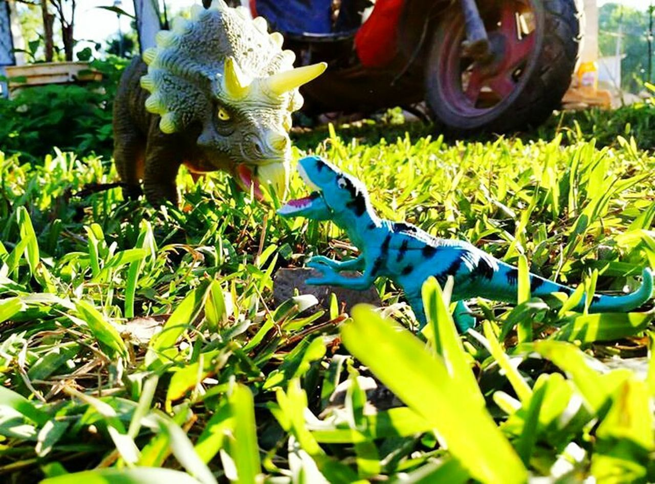 green color, no people, day, one animal, outdoors, plant, animal themes, growth, grass, reptile, close-up, nature