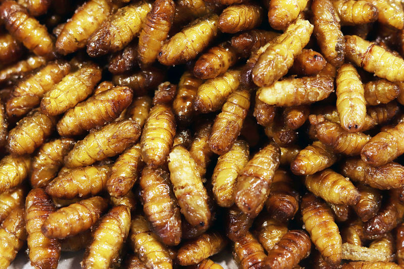 Insect Fried, Crispy silkworm, popular insects snack cheap high protein in Thailand Street food low fat and many asian country Crispy Insect Fried Silkworm Snack Thailand Street Foods Thailand Street Food Backgrounds Brown Cheap Cheap Food Close-up Food Food And Drink Freshness Full Frame High Protein Indoors  Insects  Low Fat Low Fat Food No People Ready-to-eat Silkworms Snack Still Life