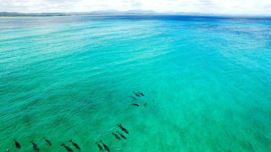 Scenic view of sea and doplhin pod