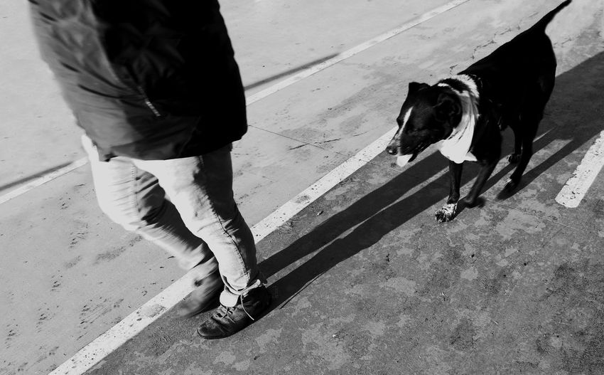 Low section of person with dog on street