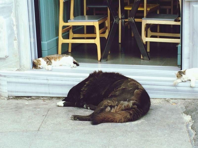 Sleeping Sleeping Cat Sleeping Dog Peace