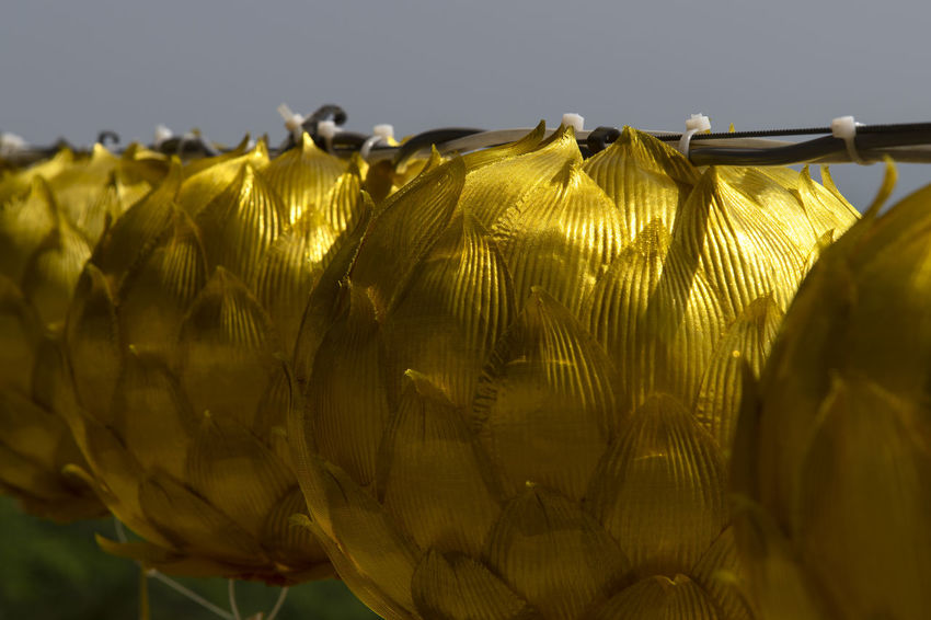 view at Bomunsa, a famous Buddhism temple in Seokmodo, Kimpo, Gyeonggido, South Korea Bomunsa Buddhism Temple Seokmodo South Korea South Korea🇰🇷 Beauty In Nature Buddhism Close-up Clothing Day Feather  Focus On Foreground Gold Colored Hanging Nature No People Outdoors Pattern Plant Religion Selective Focus Sky Still Life Sunlight Temple Textile Yellow