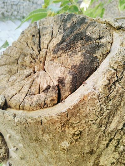 Day No People Tree Stump Textured  Nature Outdoors Deforestation Tree Ring Rough Close-up Fourmies Artisan, Artist, Chemicals, Coating, Craftsperson, Craftswoman, Expert, Fire, Flame, Gypsy, Heat, Labor, Master, Meticulous Worker, Pans, Pots, Silvery, Sparks, Tin, Tinning, Toil, Woman, Worker, Workers Travel Destinations Verdon Gorge Pacatourisme PACA