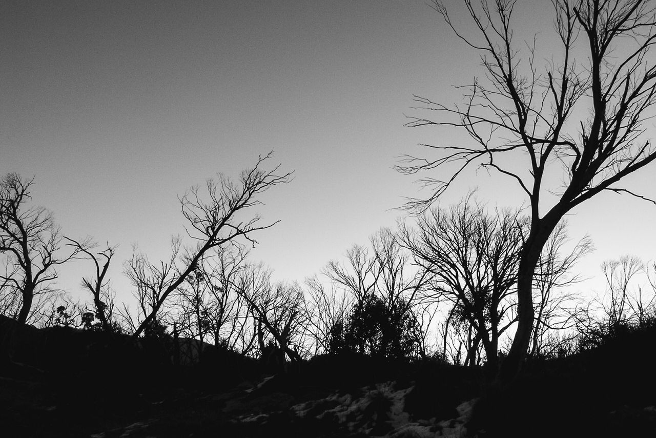 Black And White Image Of Bare Trees Under Clear Sky