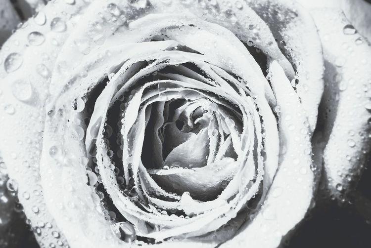 Roses Blackandwhite Flowers Wedding Photography Romantic Nature Beautiful Weddingbouquet Vintage