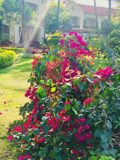 Growth Plant Flower Nature Beauty In Nature Leaf Outdoors