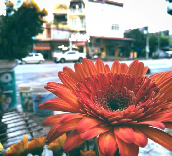 Flower Outdoors Freshness Flower Head Red Petal Fragility Water Day Nature Beauty In Nature Close-up No People City Building Exterior Nokia  Nokia 5