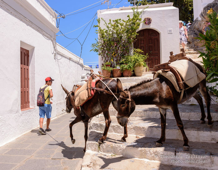 Donkeys EyeEm Best Shots Architecture Building Building Exterior Built Structure Day Domestic Domestic Animals Full Length Herbivorous Lindos Greece Livestock Mammal Men Nature One Person Outdoors Pets Real People Sunlight Vertebrate