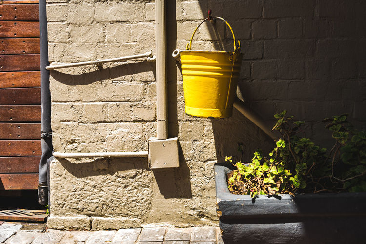Yellow potted plant against wall