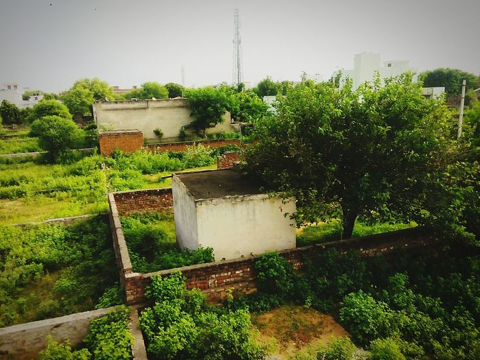 Greenry in jaipur ..the moment of morning time with wonder ful nature.. First Eyeem Photo