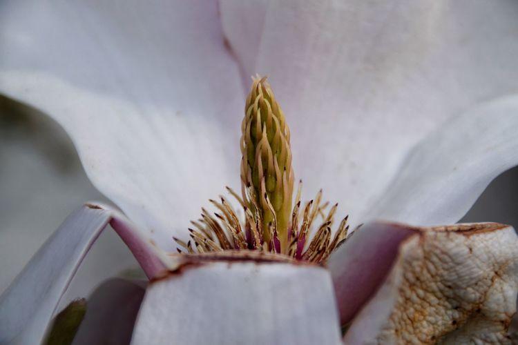 Detail Shot Of Flower