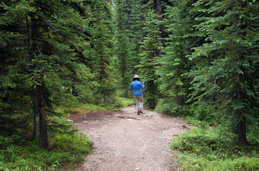 Hiking Down The Path Forest Green Color Lush Foliage Outdoors Path In The Forest Person Hiking Rear View Refreshing Tourism Travel Destinations Walking Woman Hiking My Best Travel Photo A New Beginning