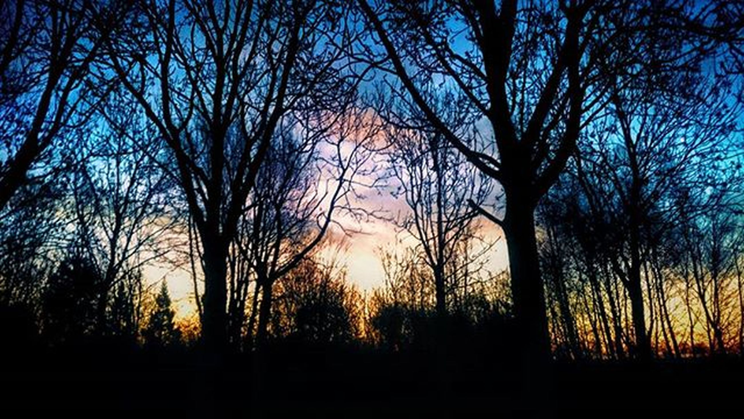silhouette, tree, sunset, tranquility, tranquil scene, scenics, beauty in nature, bare tree, sky, nature, branch, idyllic, landscape, dark, non-urban scene, growth, forest, outdoors, tree trunk, dusk