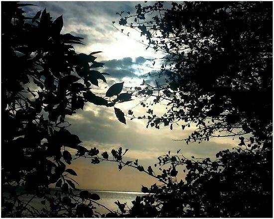 Showcase July Ostsee 😎 Baltic Sea Sunset Silhouettes Sea Reflections Sunset_collection Sunsets Sunset Insel Rügen Deutschland Tree And Sky Sea And Sky Seaside Baltic Sea Germany Rügen Island Tree Summer ☀ Doğa Beautiful Taking Photos Eye4photography  Hello World