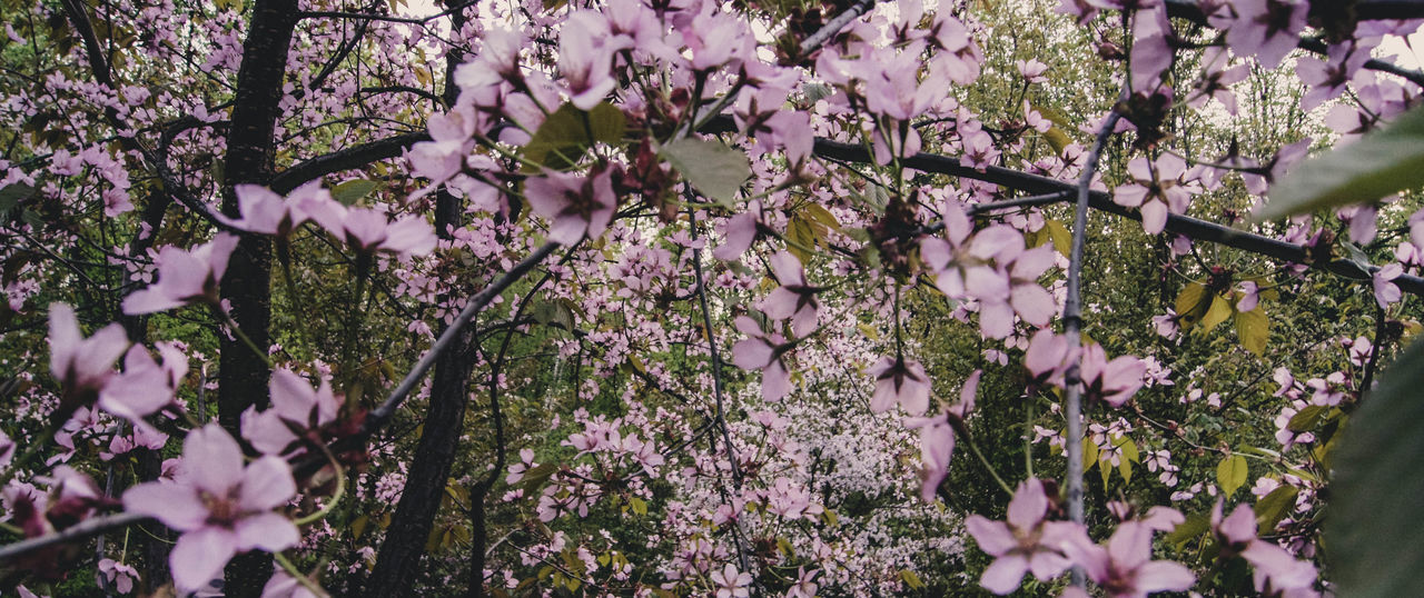 EyeEm Best Shots EyeEmNewHere EyeEm Nature Lover Eye4photography  Tree Flower Branch Flower Head Springtime Pink Color Blossom Close-up Magnolia Fruit Tree Flower Tree Apple Tree Almond Tree Stamen Cherry Tree Apple Blossom Orange Tree Cherry Blossom Pistil Orchard Wisteria In Bloom Twig