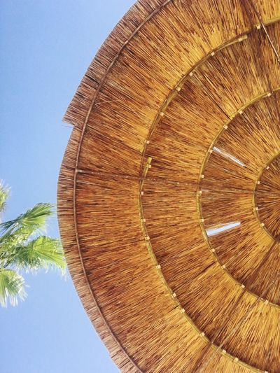 Palm Tree Palm Leaves Blue Sky Holidays Vacation Freedom Tranquility Relaxation Lifestyles High Angle View Tree No People Textured  Low Angle View Close-up Nature Clear Sky Outdoors Tree Ring Holiday Vacations Summer Summer Views Pattern Mix Yourself A Good Time