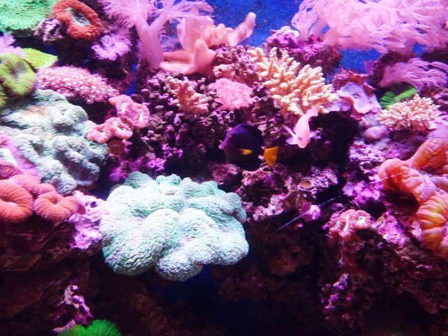 Underwater UnderSea Coral Sea Life Reef Sea Water