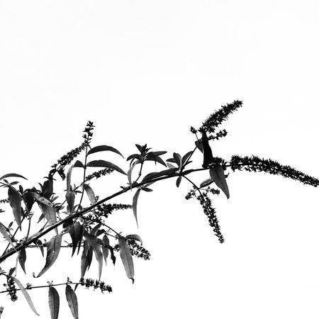 No People Nature Silhouette Branch Outdoors Beauty In Nature Close-up Day Black And White Graphic