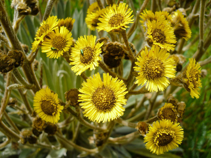 Beauty In Nature Blooming Boyaca Boyacá, Colombia Close-up Cocuy Colombia Colombia ♥  Day Flower Flower Head Fragility Freshness Growth Nature No People Outdoors Petal Plant Yellow