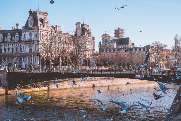 Architectures of Paris, France. Water Building Exterior Built Structure Architecture Animal Animal Themes Animal Wildlife Animals In The Wild Bird Vertebrate Group Of Animals Sky Nature Flying Large Group Of Animals Day Waterfront Travel Destinations City No People Flock Of Birds Outdoors Seagull Canal Seagulls