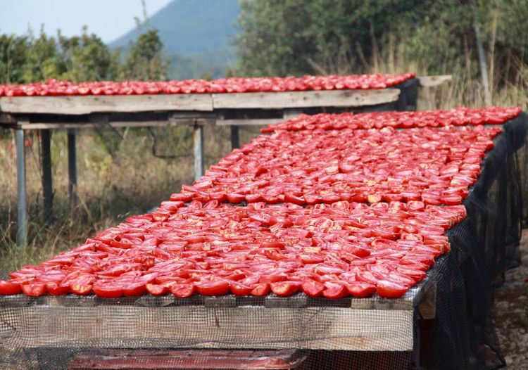 Tomatoes arranged on tables