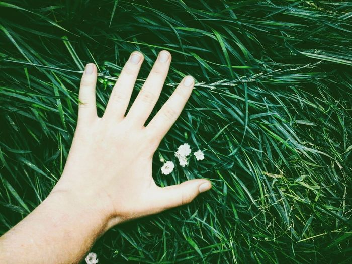 Cropped Image Of Hand Touching Grassy Field