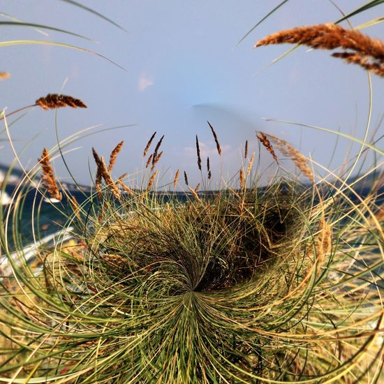 Focus On Foreground Grass Close-up Nature Selective Focus Tranquility Outdoors Sky Taking Photos Round And Round Beach Photography Baltic Sea Concentric