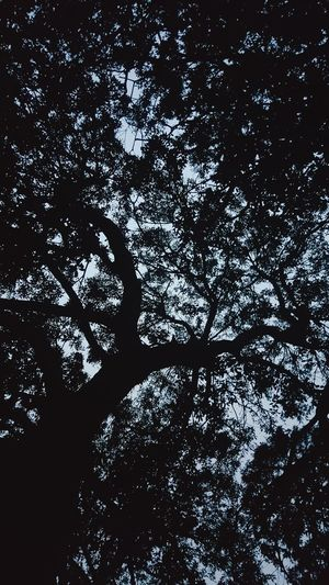 Backgrounds Tree Full Frame Abstract Close-up Sky Silhouette