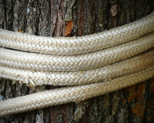 Close up of rope rolled on tree trunk