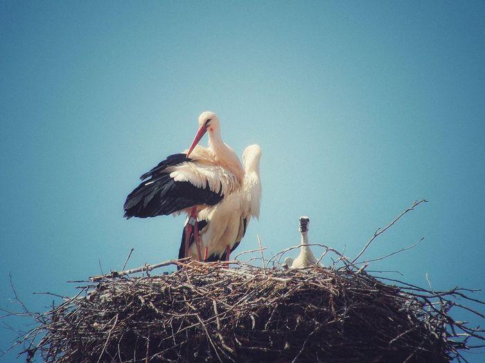 Birds perching on nest against clear sky